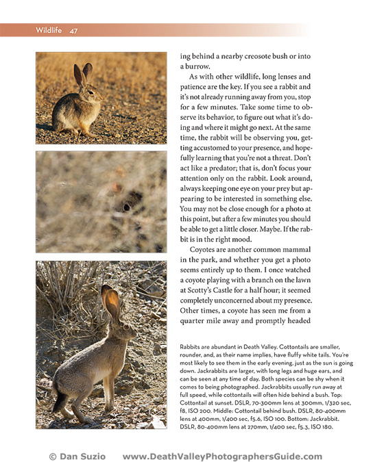 Death Valley Photographers Guide - Wildlife